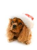 Cute dog in Santa hat Stock Images