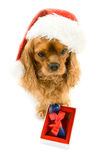 Cute dog in Santa hat and box with bone Stock Image