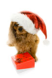 Cute dog in Santa hat and box with gift Royalty Free Stock Photography