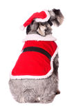 Cute dog in a Santa outfit Royalty Free Stock Photos