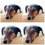Cute dog Stock Photos