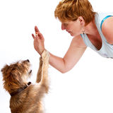 Cute dog sits up eager for a treat. Happy smiling woman bends down to give a treat to her small shaggy dog. Her hair color and texture is similar to the dog's Stock Photography