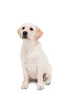 Cute dog sitting alone and looking up Royalty Free Stock Images