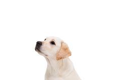 Cute dog sitting alone and looking up Stock Image