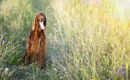 Cute dog sitting in the grass stock photos