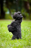 Cute dog sitting on his hind legs Stock Images