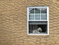 Cute Puppy Sitting and Looking on House Window Sill Dog Background Wallpaper stock photos