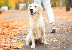 Cute dog sitting on pathway royalty free stock photos