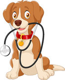 Cute dog sitting with stethoscope Stock Image