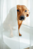 Cute dog Stock Photography