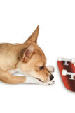 Cute dog with skateboard toy Stock Images