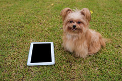Cute Dog with Smart Tablet Royalty Free Stock Images