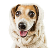 Cute dog smiling in a headdress Royalty Free Stock Photo