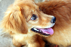 Cute dog smiling Royalty Free Stock Photos