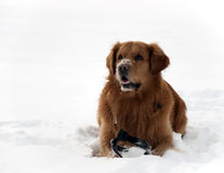 Cute dog in snow Stock Photo