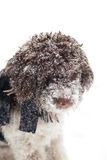 Cute dog in snow Royalty Free Stock Photos