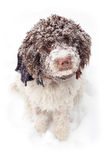 Cute dog in snow. Cute dog covered with snow Stock Photography