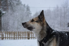 Cute dog in snow Stock Photos