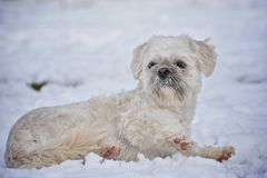 Cute Dog on the snow Royalty Free Stock Image