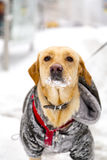 Cute dog in snow Royalty Free Stock Photography