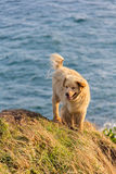 Cute dog stand on the cliff Royalty Free Stock Images