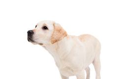 Cute dog standing alone and looking up Royalty Free Stock Photos