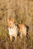 Cute dog standing in tall grass Royalty Free Stock Image