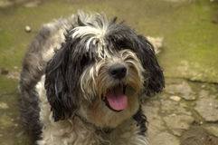 Cute dog Stock Photography