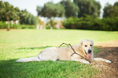 Cute dog with stick Royalty Free Stock Images