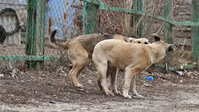 Cute dog stray puppies playing pet together. Cute  dog stray puppies playing pet together stock video