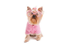 Cute dog in style. Stock Photos