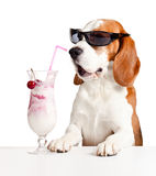 Cute dog in sunglasses drink cocktail Stock Images
