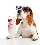 Cute dog in sunglasses drink cocktail stock image
