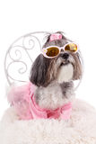 Cute dog with sunglasses, pink dress and wings. Cute dog with sunglasses, dressed like a fairy with wings, sitting on a chair. Studio shot of an adorable female royalty free stock photography