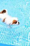 Cute Dog swimming Stock Photo