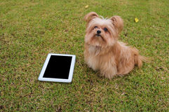Cute Dog with Tablet Stock Images