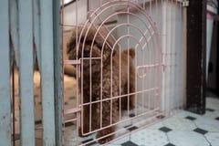 A cute dog in Tainan, Taiwan. A cute dog in Tainan, Taiwan royalty free stock image