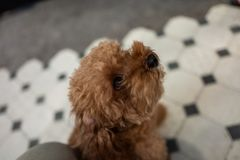 A cute dog in Tainan, Taiwan. A cute dog in Tainan, Taiwan royalty free stock images