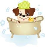 Cute dog taking a bath Stock Image