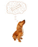 Cute dog with thought bubble thinking about a bone Royalty Free Stock Photo