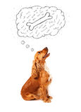 Cute dog with thought bubble thinking about a bone Stock Image