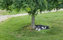 Cute Dog Tired Sleeping Royalty Free Stock Image