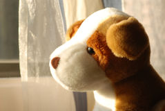 Cute dog toy Stock Images