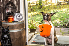 Cute Dog Trick or Treating Stock Images