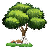 A cute dog under the tree Royalty Free Stock Images