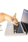 Cute dog using laptop Stock Photos