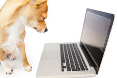 Cute dog using laptop Stock Images
