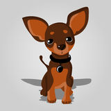Cute dog. Royalty Free Stock Photo