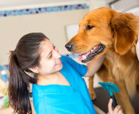 Dog at the vet Stock Photography