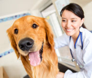 Cute dog at the vet Royalty Free Stock Image